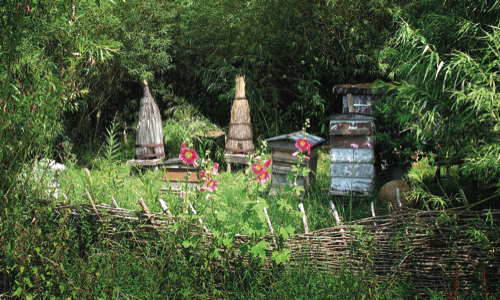 Chris Park's Bee Garden