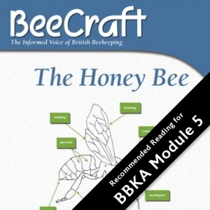 Honey Bee Illustrated